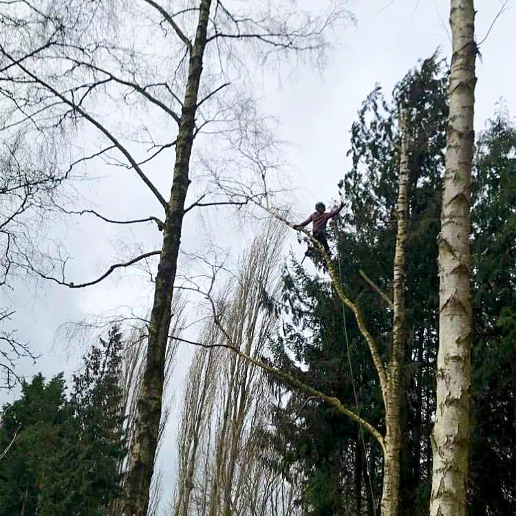 Local Tree Surgeons