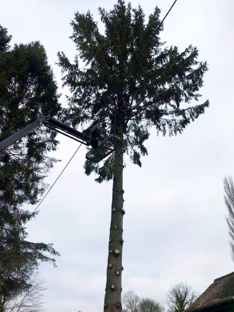 Tree Crown Raising