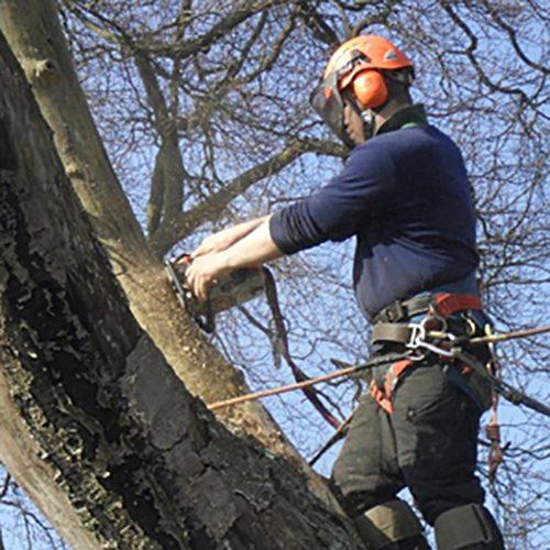 Dangerous and Diseased Trees