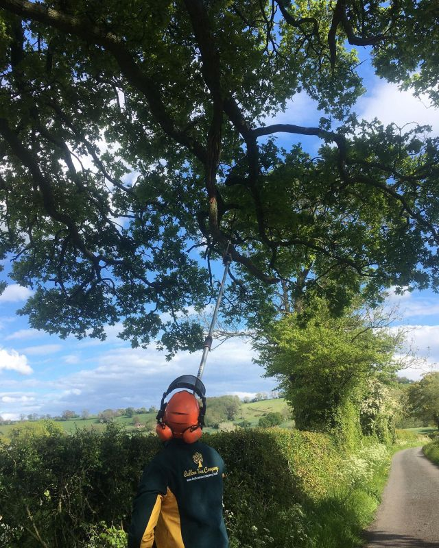 Bit of dead wooding over a country lane #treesurgeonsherefordshire